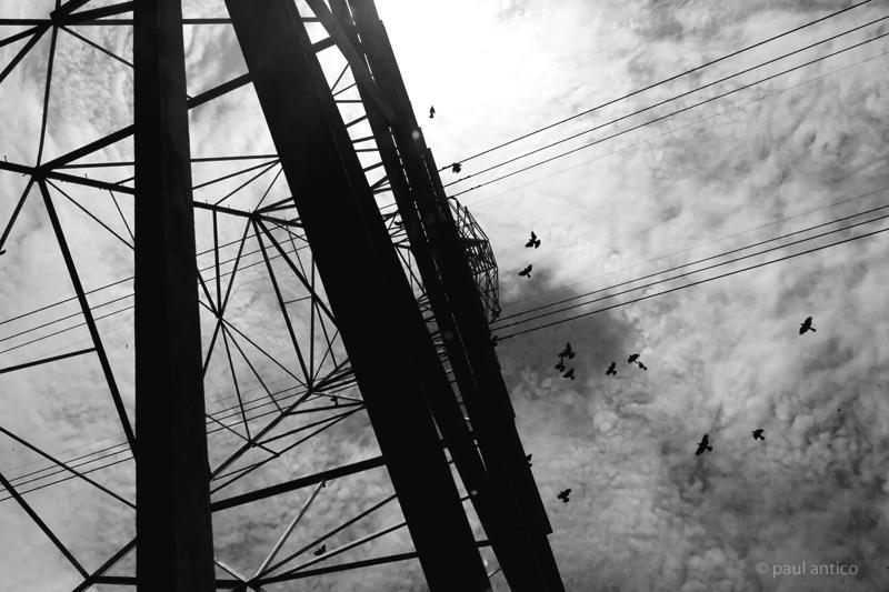 wirebirds_pa