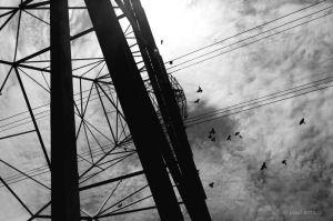 electric birds